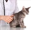 Ветеринарные клиники в Корткеросе